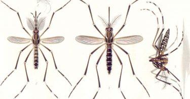 Zika: Old virus, new challenges | www.APHLblog.org