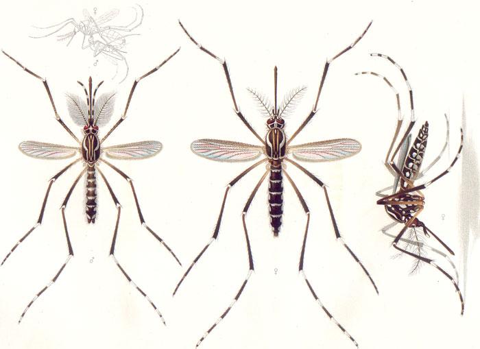 Zika: un virus antiguo con nuevos desafíos