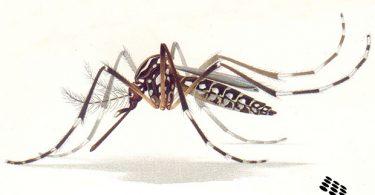 Inside the public health lab Zika response | www.APHLblog.org