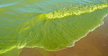 What you need to know about harmful algal blooms | www.APHLblog.org