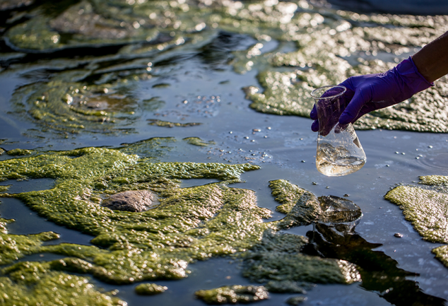 Scientist taking a sample from algae-covered body of water.